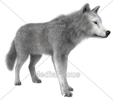 3D Illustration Of A Polar Wolf Isolated On White Background Stock Photo