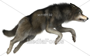3D Illustration Of A A Wild Wolf Jumping Isolated On White Background Stock Photo