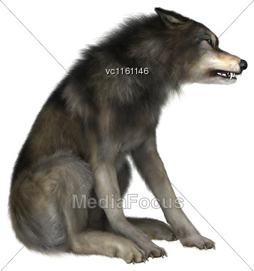 3D Illustration Of A Wild Wolf Sitting Isolated On White Background Stock Photo