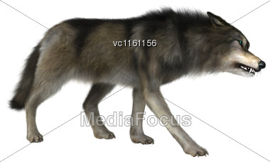 3D Illustration Of A Wild Wolf Isolated On White Background Stock Photo