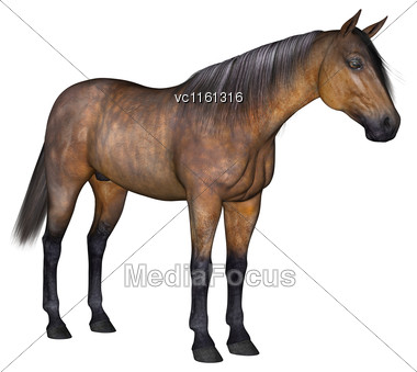 3D Rendering Of A Bay Horse Isolated On White Background Stock Photo