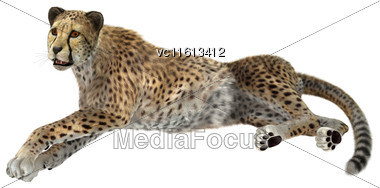 3D Rendering Of A Big Cat Cheetah Isolated On White Background Stock Photo