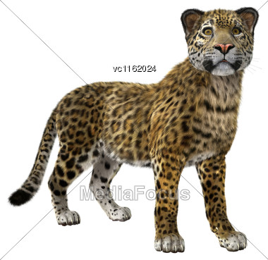 3D Rendering Of A Big Cat Jaguar Isolated On White Background Stock Photo