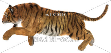 3D Rendering Of A Big Cat Tiger Hunting Isolated On White Background Stock Photo