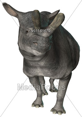 3D Rendering Of A Died Animal Brontotherium Isolated On White Background Stock Photo