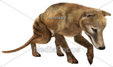 3D Rendering Of A Died Animal Thylacine Isolated On White Background Stock Photo