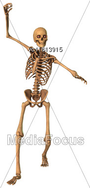 3D Rendering Of A Human Skeleton Isolated On White Background Stock Photo