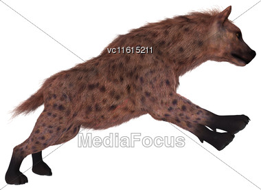 3D Rendering Of A Hyena Hunting Isolated On White Background Stock Photo