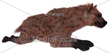 3D Rendering Of A Hyena Isolated On White Background Stock Photo