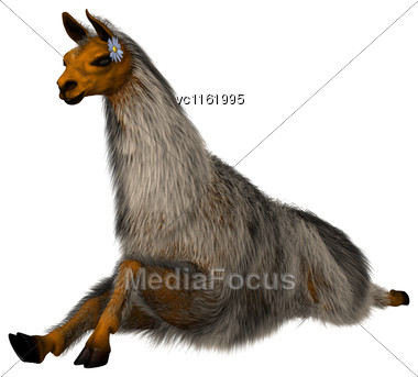 3D Rendering Of A Llama Or Lama Glama, A Domesticated South American Camelid, Isolated On White Background Stock Photo