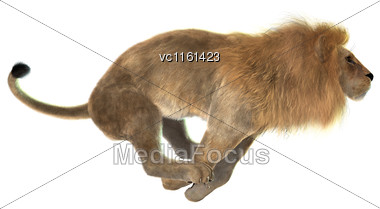 3D Rendering Of A Male Lion Hunting Isolated On White Background Stock Photo