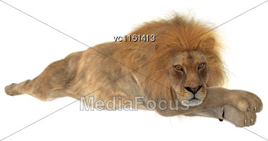 3D Rendering Of A Male Lion Resting Isolated On White Background Stock Photo