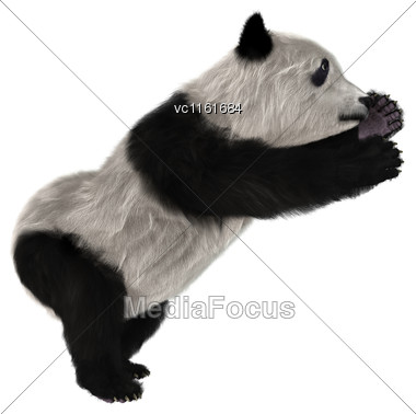 3D Rendering Of A Panda Bear Cub Isolated On White Background Stock Photo