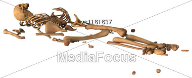 3D Rendering Of Parts Of A Human Skeleton Isolated On White Background Stock Photo