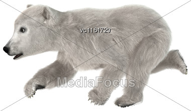 3D Rendering Of A Polar Bear Cub Isolated On White Background Stock Photo
