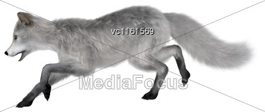 3D Rendering Of A Polar Fox Isolated On White Background Stock Photo