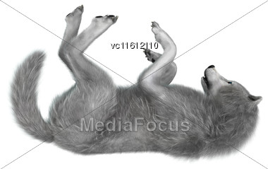 3D Rendering Of A Polar Wolf Isolated On White Background Stock Photo