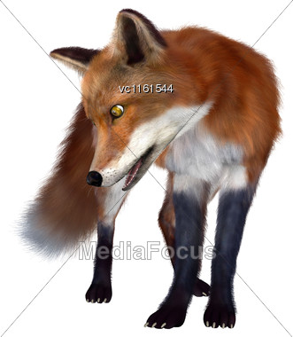 3D Rendering Of A Red Fox Isolated On White Background Stock Photo