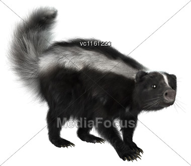 3D Rendering Of A Skunk Isolated On White Background Stock Photo