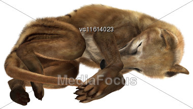 3D Rendering Of A Thylacine Isolated On White Background Stock Photo