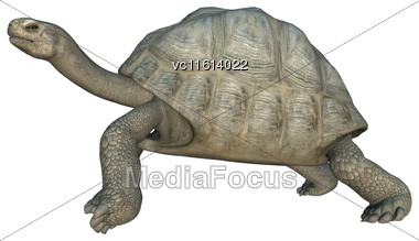 3D Rendering Of A Turtle Galapagos Tortoise Isolated On White Background Stock Photo