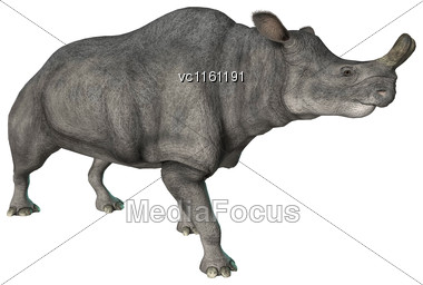 3D Rendering Of A Walking Brontotherium Isolated On White Background Stock Photo