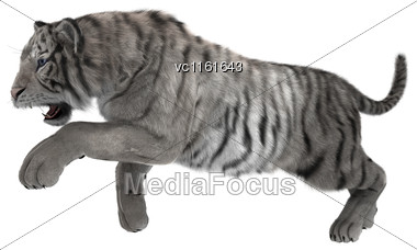3D Rendering Of A White Tiger Isolated On White Background Stock Photo