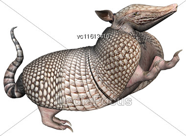 3D Rendering Of A Wild Armadillo Isolated On White Background Stock Photo