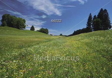 countryside nature summer Stock Photo