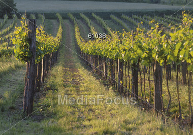wine vinyards agriculture Stock Photo