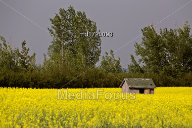Abandoned Farm Buildings In Saskatchewan Canada Weathered Stock Photo