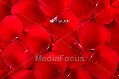 Abstract Background Dark Red Of Rose Petals For Your Design. Close-up. Studio Photography Stock Photo