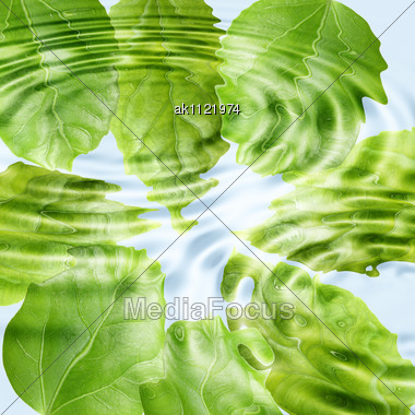Abstract Background Of A Green Leaf Under Blue Water. Close-up Stock ...