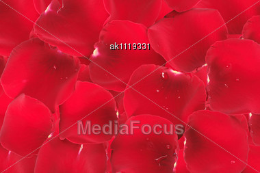 Abstract Background Of Red Rose Petals. Close-up. Studio Photography Stock Photo