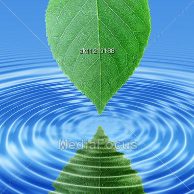 Abstract Background Of A Reflect Green Leaf In Blue Water. Close-up Stock Photo