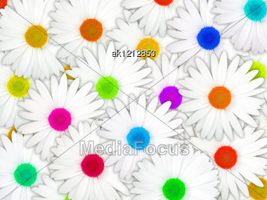 Abstract Background Of White Flowers With Motley Center For Your Design. Close-up. Studio Photography. Stock Photo