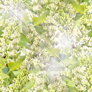 Abstract Background Of White Lilac With Green Leafs. Seamless Pattern For Your Design. Close-up. Studio Photography. Stock Photo
