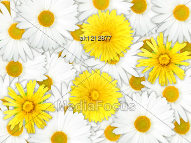 Abstract Background Of Yellow And White Flowers For Your Design. Close-up. Studio Photography. Stock Photo