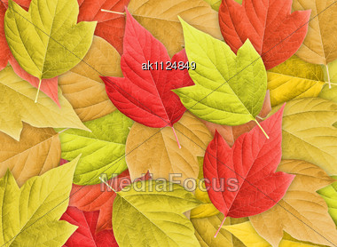 Abstract Colorful Nature Background With Group Of Autumn Leafs.Close-up. Studio Photography Stock Photo