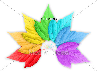 Abstract Colorful Rainbow Gradient With Group Of Leafs. On White Background. Close-up. Studio Photography Stock Photo