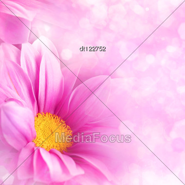 Abstract Floral Backgrounds For Your Design Abstract Floral Backgrounds