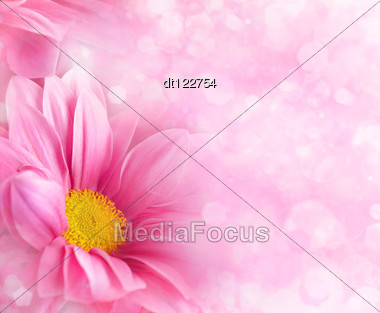 Abstract Floral Backgrounds For Your Design Stock Photo