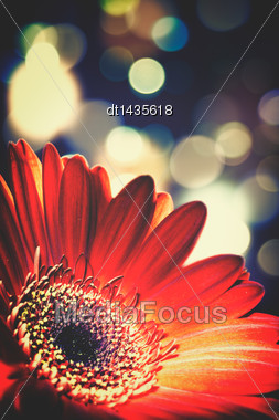Abstract Floral Backgrounds With Beaty Bokeh Stock Photo