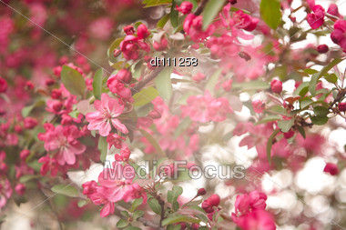 Abstract Floral Backgrounds With Beautiful Bokeh Stock Photo