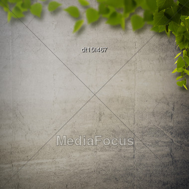 Abstract Natural Backgrounds With Birch Foliage Against Concrete Wall Stock Photo