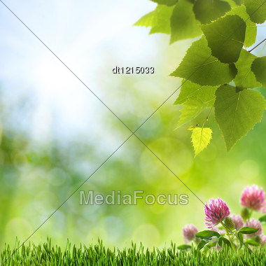 Abstract Natural Backgrounds With Clover Flowers And Beauty Bokeh Stock Photo