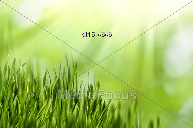 Abstract Natural Backgrounds With Green Grass And Beauty Bokeh Stock Photo