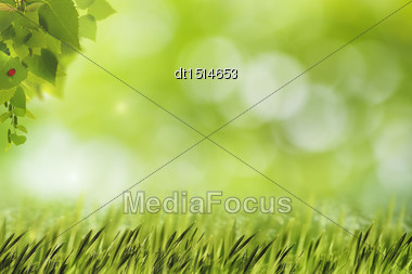 Abstract Natural Backgrounds With Green Grass, Birch Foliage And Beauty Bokeh Stock Photo
