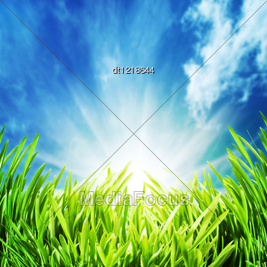 Abstract Natural Backgrounds With Green Grass Under The Blue Skies Stock Photo