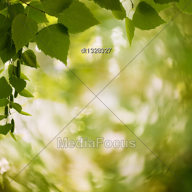 Abstract Natural Backgrounds With Petzval Lens Bokeh Stock Photo